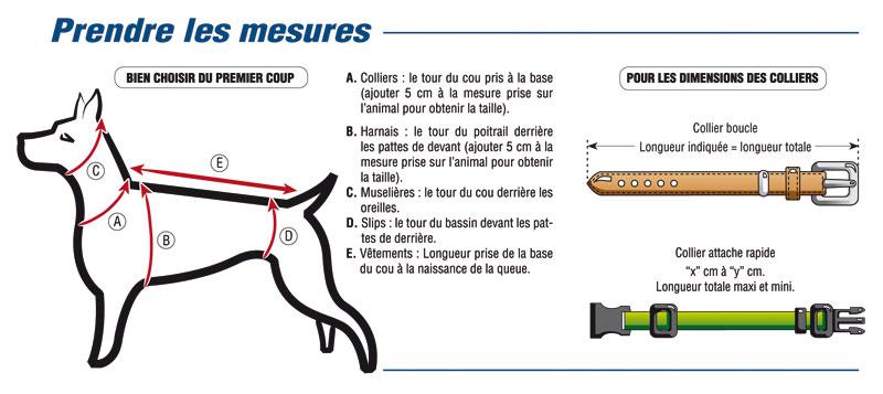 comment prendre mesure d'un chien